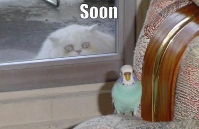 soon-white-cat-green-parrot2