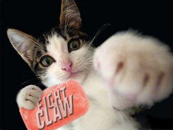 fightpaw